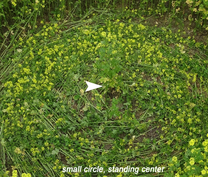 CROP CIRCLE UPDATE : MUSTARD SEED (FAITH) Sm%20cir,standing%20center%20copy14