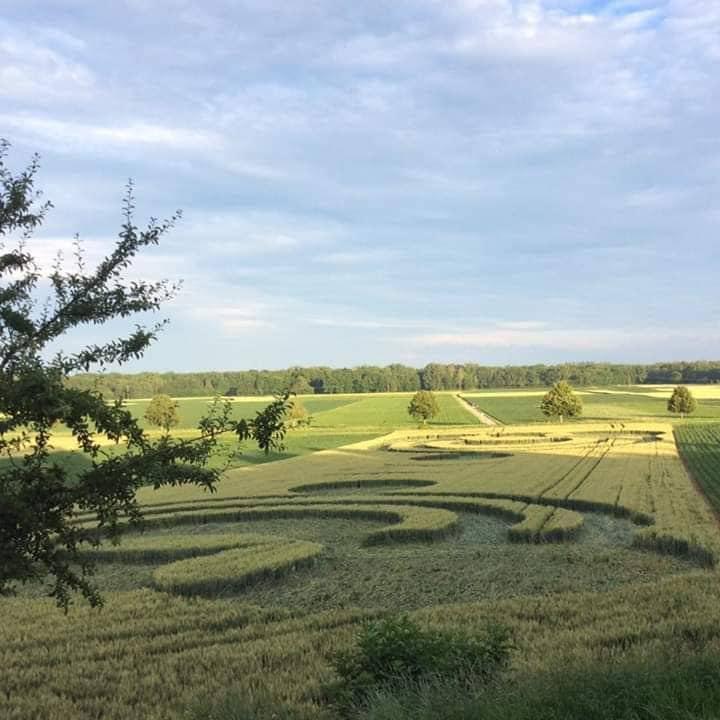 Crop Circles 2019 ~  Alsace, France 64404666_996450614079693_250547668831436800_n